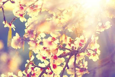 Kwiaty nie dla alergika