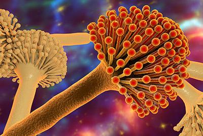 Jak unikać alergenów grzybów pleśniowych?