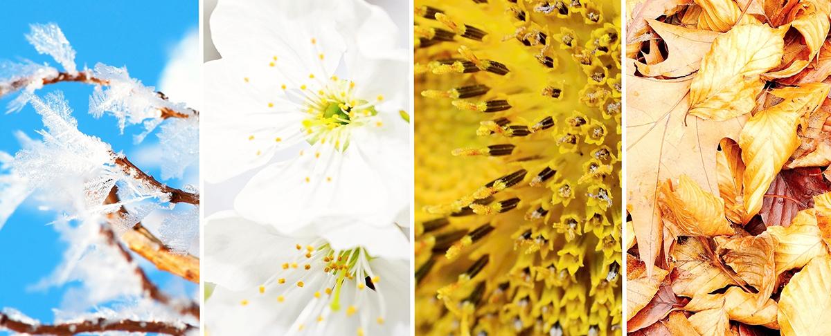 4 pory roku z alergią