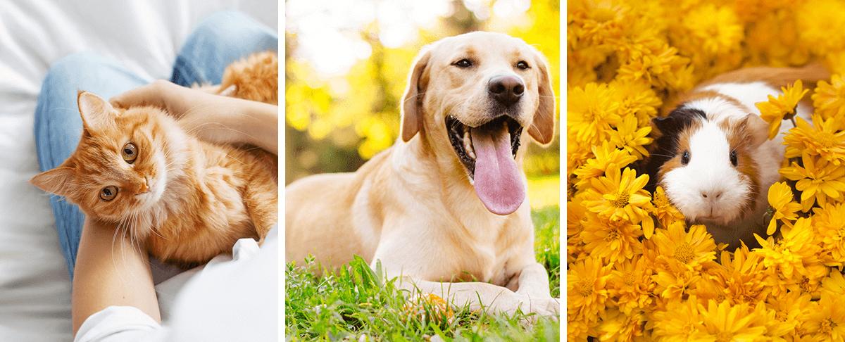 Sprawdź, jakie zwierzęta mogą być przyczyną alergii?
