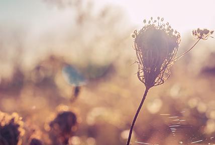 5 alergenów wziewnych