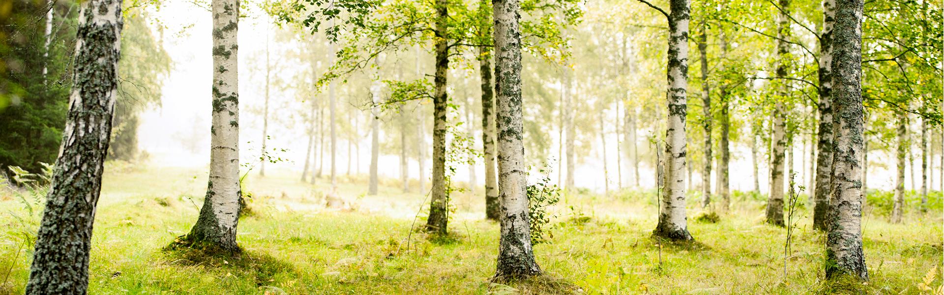 Co musisz wiedzieć o objawach alergii brzozowej?