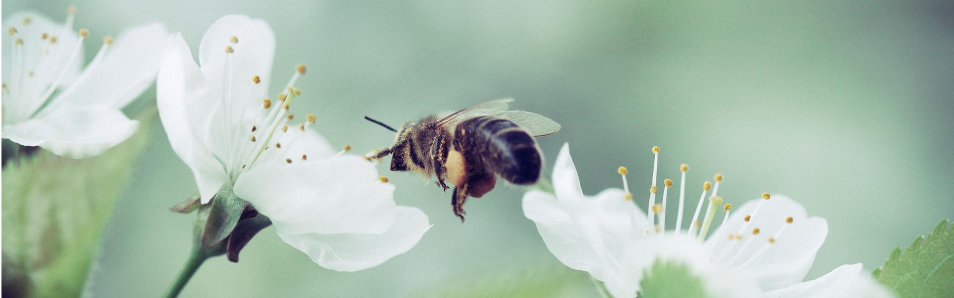 Jaki kolor przyciąga pszczoły?