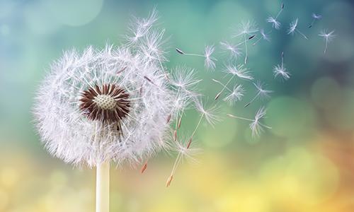 6+ najczęstszych objawów alergii na pyłki roślin